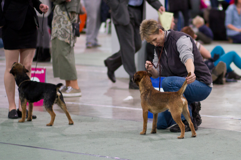 20131116_dogs4all_43