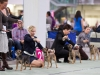 20131116_dogs4all_03