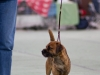 20131116_dogs4all_87