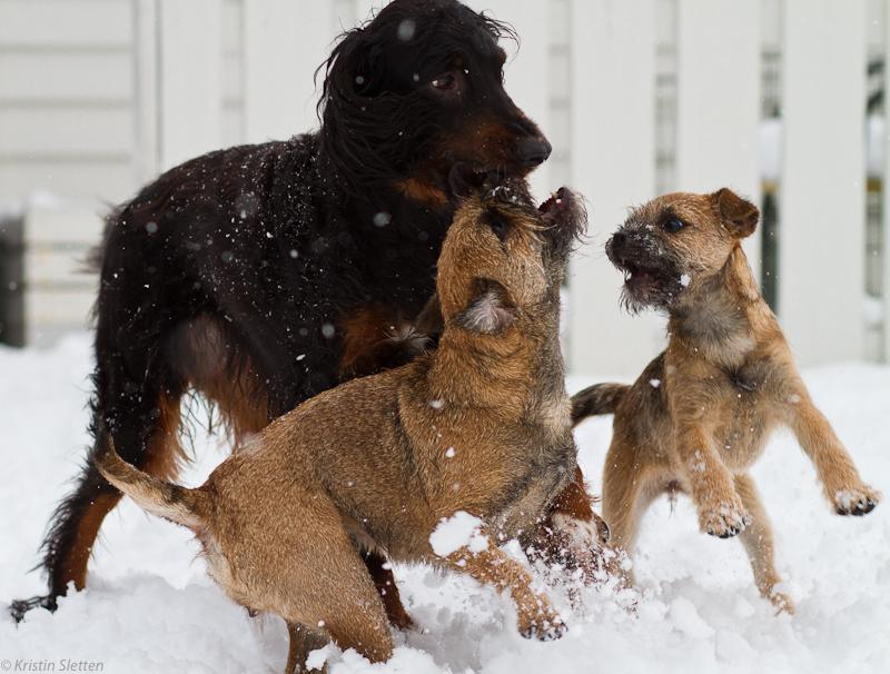 Lek i snøværet