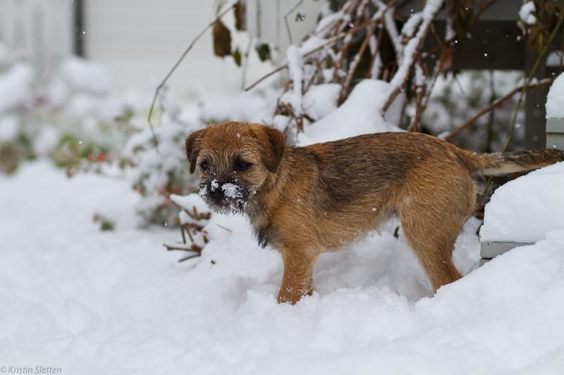Lotta i snøen