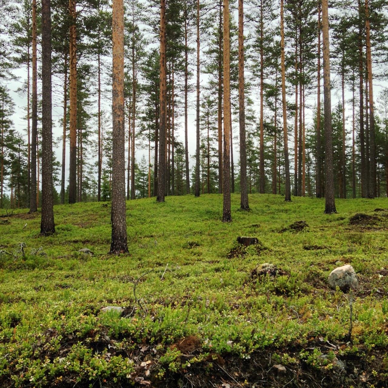 20140623_finnskogen03