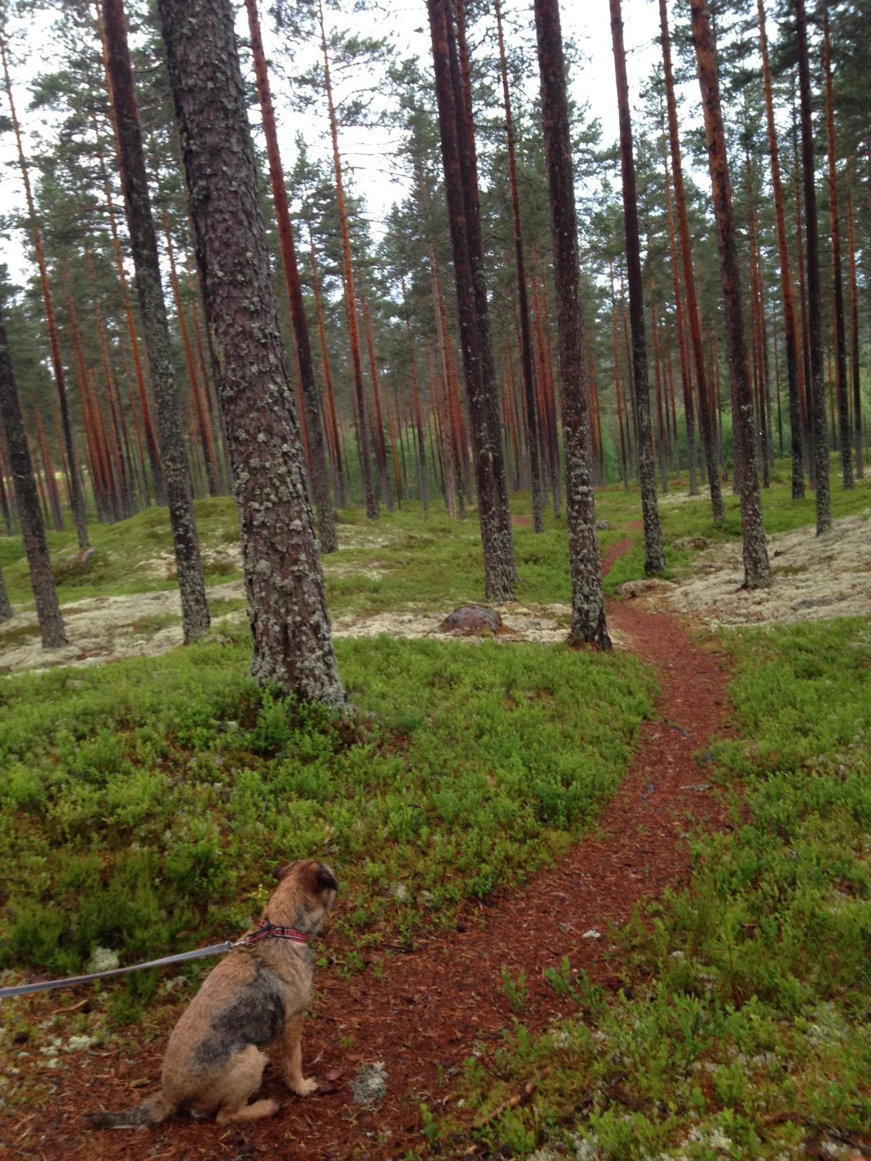 20140623_finnskogen06