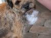 Tuva har knertet et pipedyr og fått ekstra skjegg