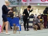 20131116_dogs4all_01