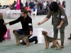 20131116_dogs4all_115
