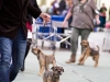 20131116_dogs4all_119