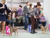 20131116_dogs4all_35