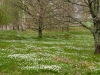 20120511_parring_13