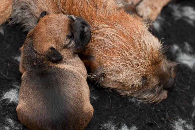 Godt å sove inntil mor